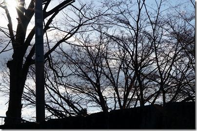 葉が落ちた木々
