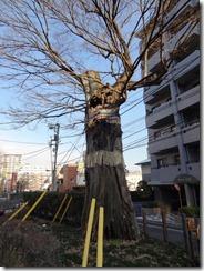 澤蔵司の魂が宿るという椋の木
