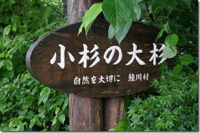 小杉の大杉の看板