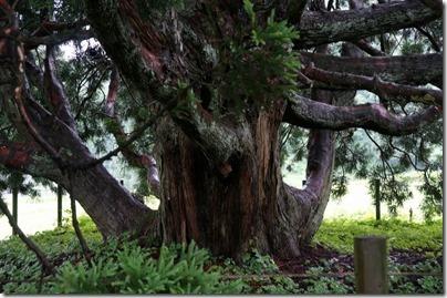 トトロの木根元