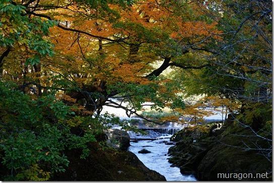 弁天島(和賀郡西和賀町沢内)の紅葉
