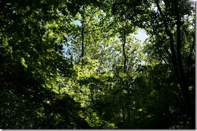 新緑が気持ちいい道路