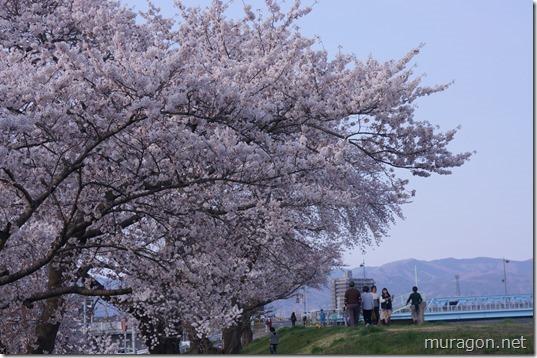 磐井川桜並木 伐採