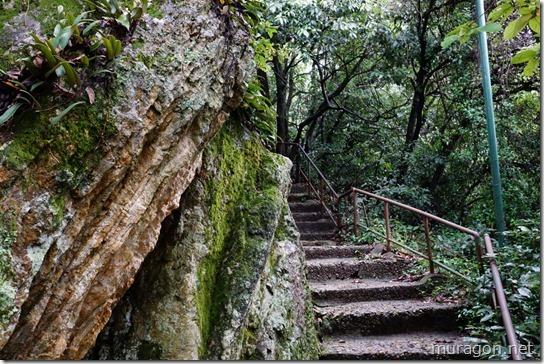 金華山のチャート層 岩石 堆積岩