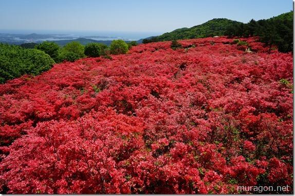 日本一のツツジの名所「徳仙丈山(気仙沼市)」
