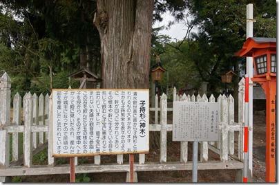 子持ち杉(神木)