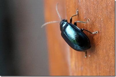 きれいな甲羅の虫