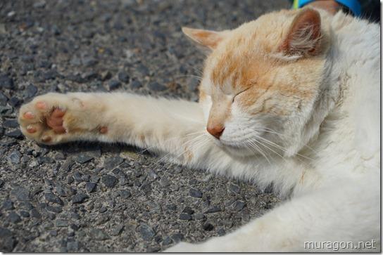 猫こまちゃん