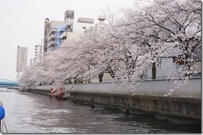 小名木川の桜並木