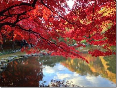 盛岡市中央公民館の紅葉