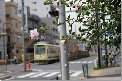 小台の車両と花