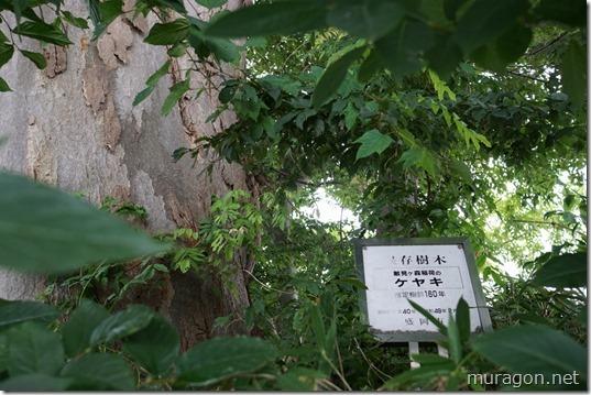 盛岡市保存樹木「敵見ヶ森稲荷のケヤキ」