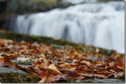 落ち葉と滝