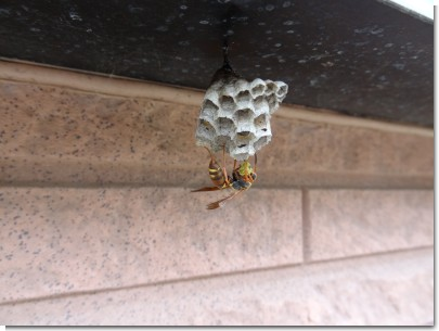 ハチの餌やり
